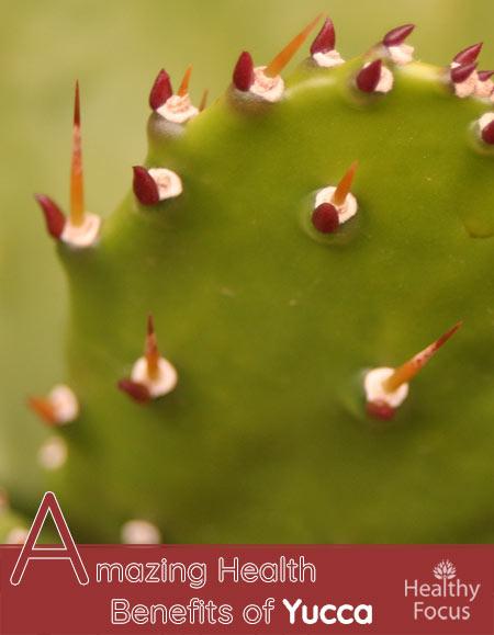 Amazing Health Benefits of Yucca