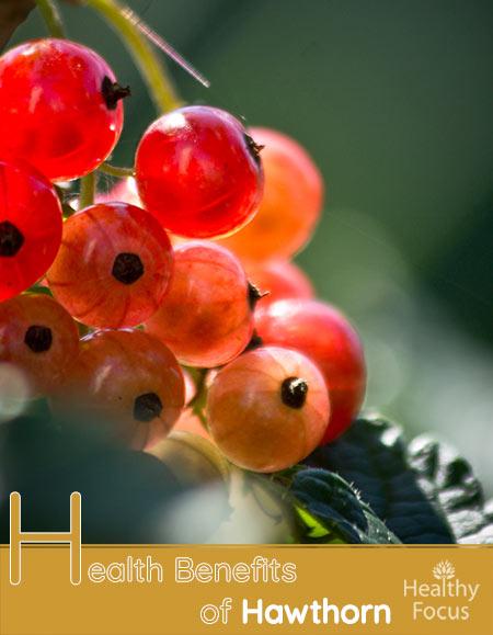 Health Benefits of Hawthorn