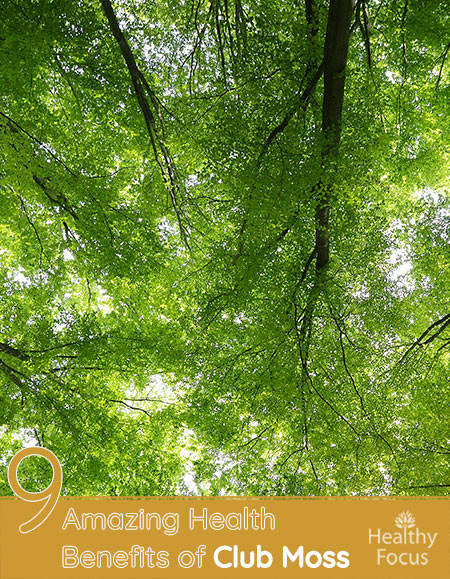 8 Amazing Health Benefits of Club Moss