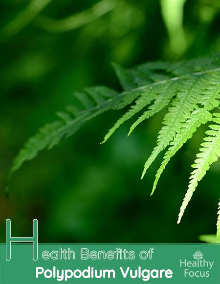 Health Benefits of Polypodium Vulgare