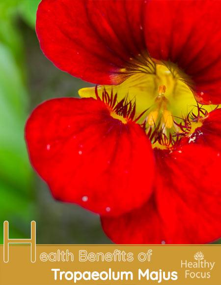 Health Benefits of Tropaeolum Majus-Nasturtium