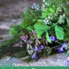 Herbs for Stronger Bones