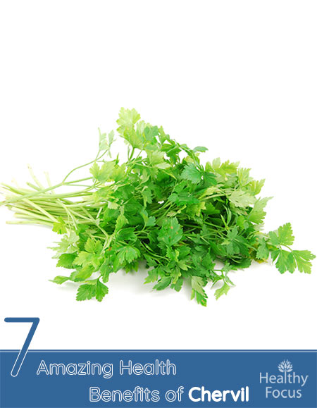 7 Amazing Health Benefits of Chervil
