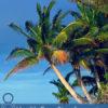 8 Health Benefits of Macadamia Nuts